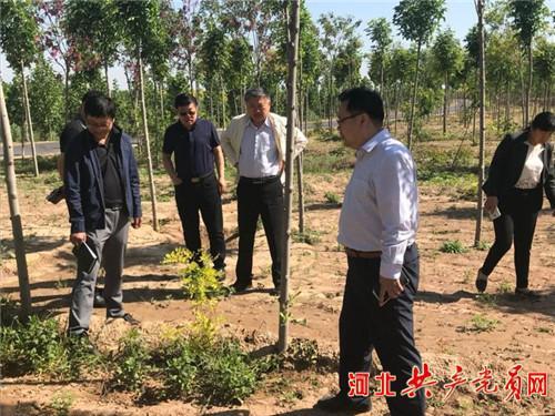 馆陶县领导督导艾草产业发展情况